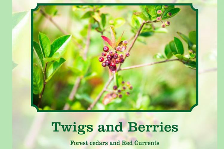 Twigs and berries scent